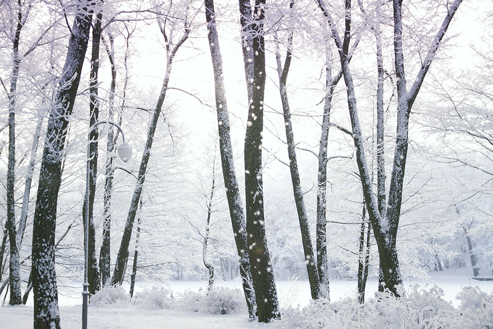 snow covered woods