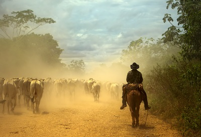 image of a farm worker on a horse